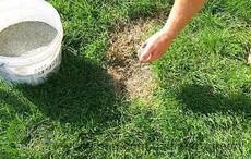 Реставрація газонів, внесення добрив та засобів хімічного захисту