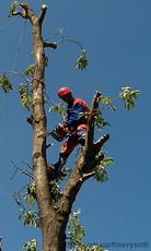 Обрізання та кронування дерев. НВ-Сервіс