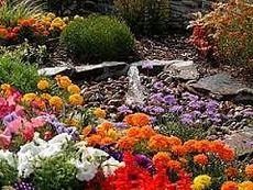 Озеленение киев, садовые цветы, петуния, бегония, тагетес, доставка цветов
